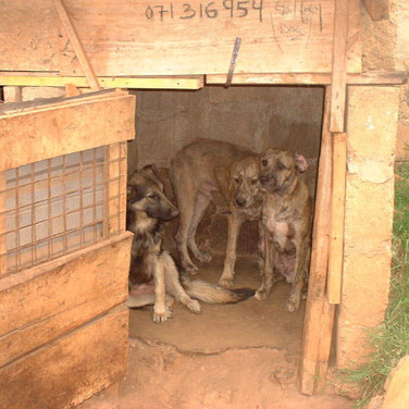 Traditional dog house