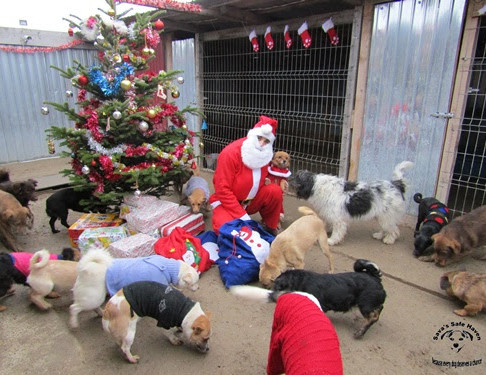 Santa Claus in an animal shelter in Romania