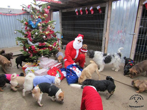 Santa visits Sava's Safe Haven, Christmas 2018