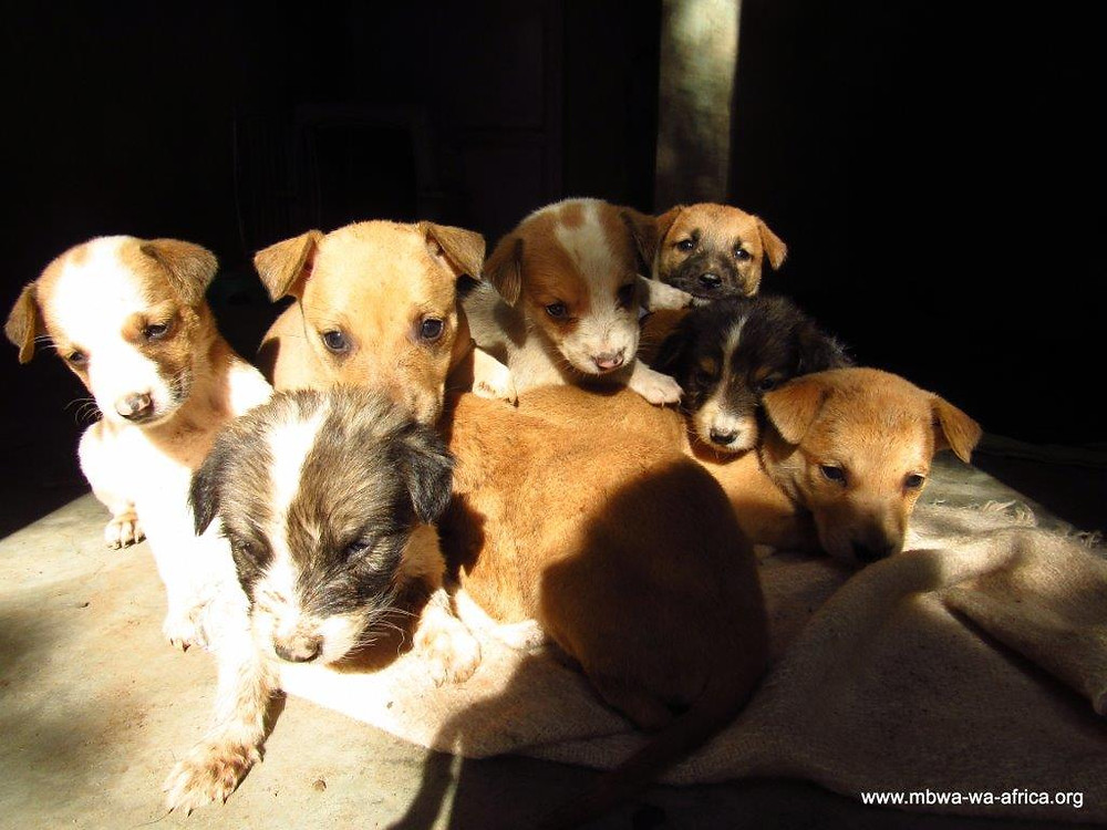 Photo 8. Nine puppies dumped, left to die, but rescued and cared for by MwA