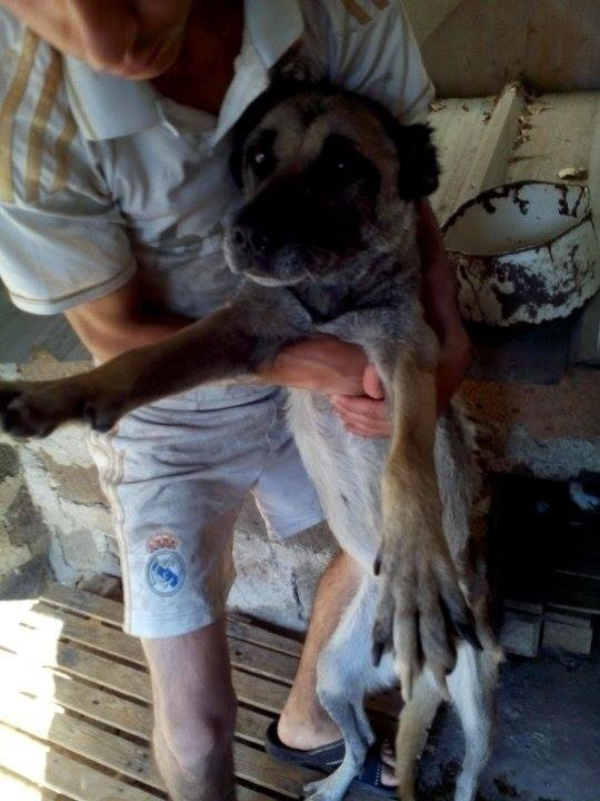 This dog was spayed thanks to AKI donors