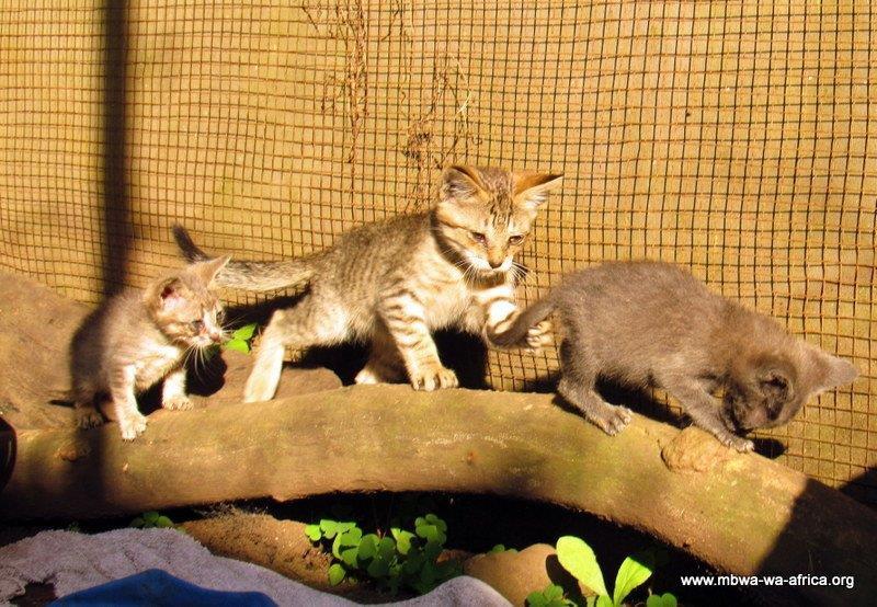 The kitties adjusted well!
