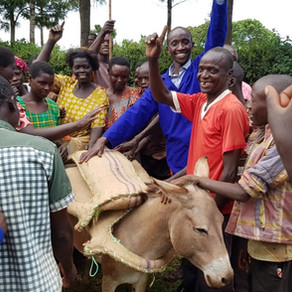 Bam Animal Clinics Trains On Humane Saddle-Making for Donkeys