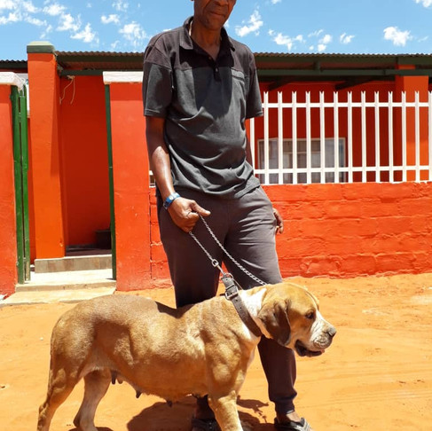 Your Donations Reaching Namibia's Cats & Dogs: 1st half of 2019