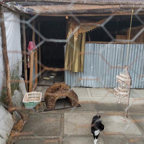 Nairobi Feline Sanctuary has happy (and sterilized) cats thanks to the grant from AKI