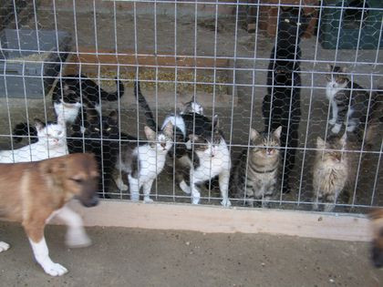 The cattery at Sava's -theycan socialize with the dogs