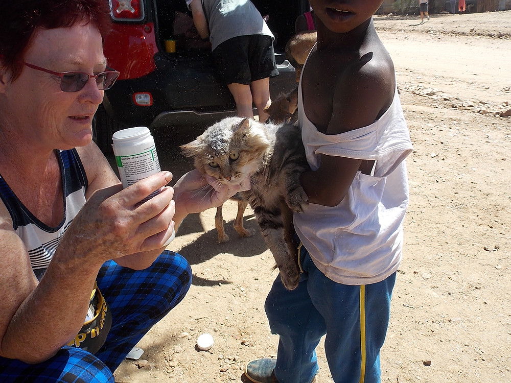 A very loved kitty is brought to our Feb feeding day