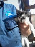 A Walvis Bay SPCA kitty