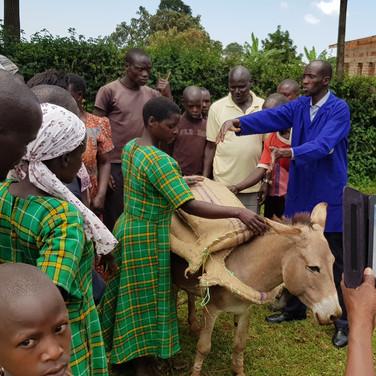Donkey with new sisal saddle
