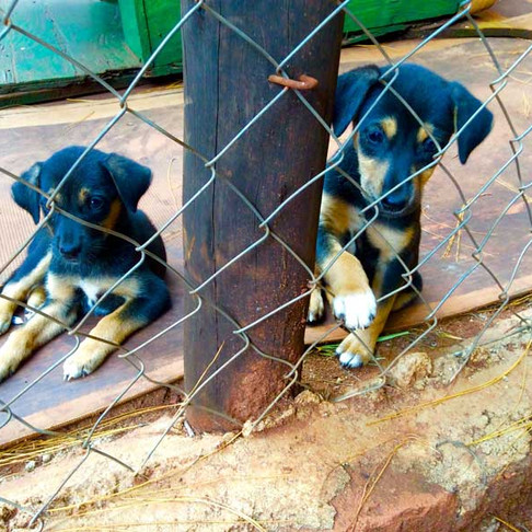 The AKI-Lilongwe SPCA Partnership-A Retrospective