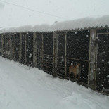 Winter at the shelter.jpg