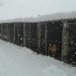 Winter at the shelter.jpg
