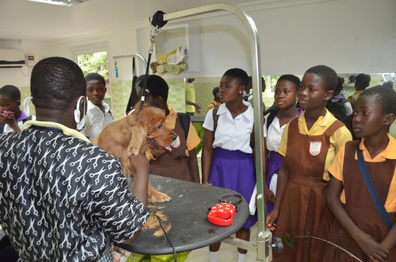 Students learn about dog grooming