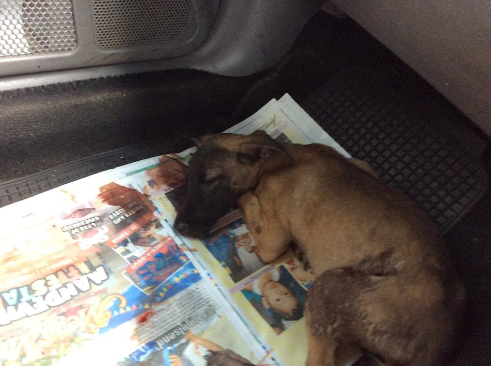 Sheena in Deborah's car, on the way to the vet