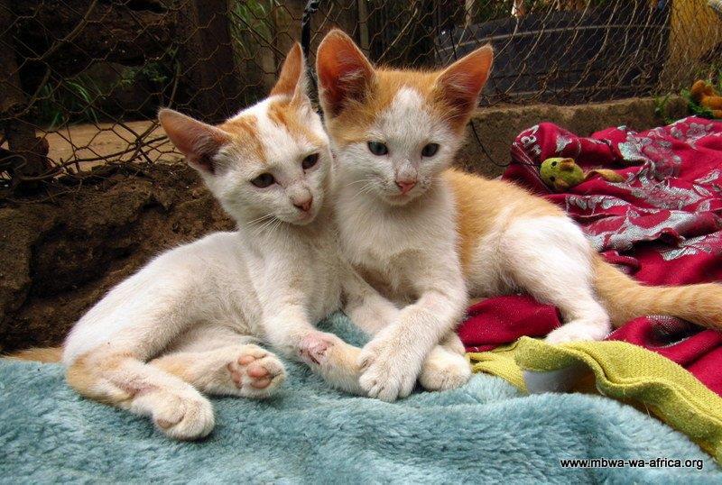 Minou (left) and Titus