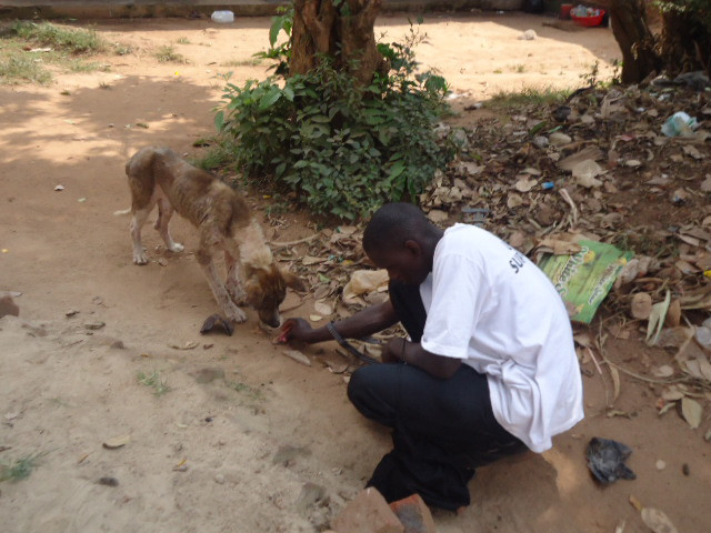 Alex rescues a street dog with a bad case of mange