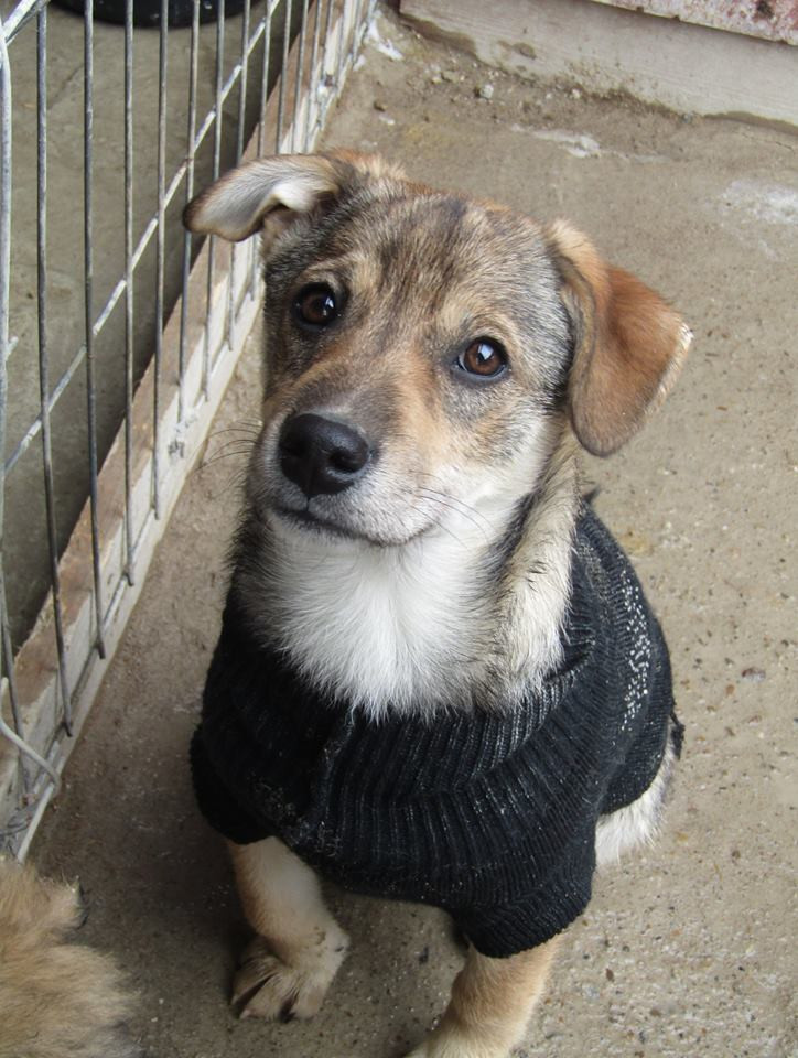 Fizz, only about 6 months old and needs a permanent home