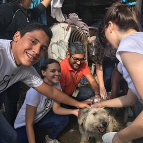 How Helping Hands for Hounds of Honduras Uses Your Donations to AKI
