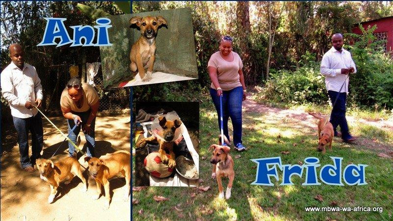 Oddy and James adopted Frida and Ani!