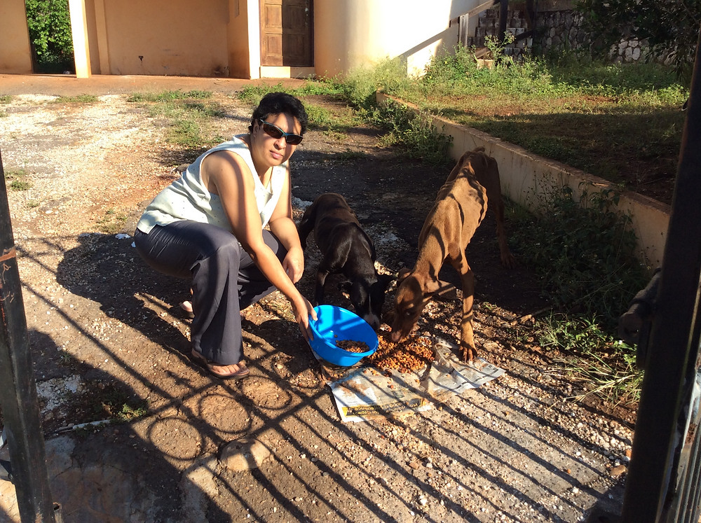 Deborah feeding starving dogs behind their gate
