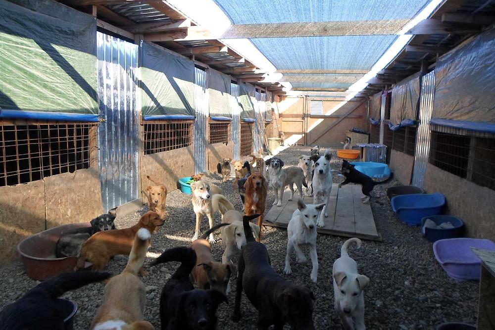 Sava's Safe Haven dog shelter