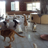 Kitties at Touch of Life Shelter