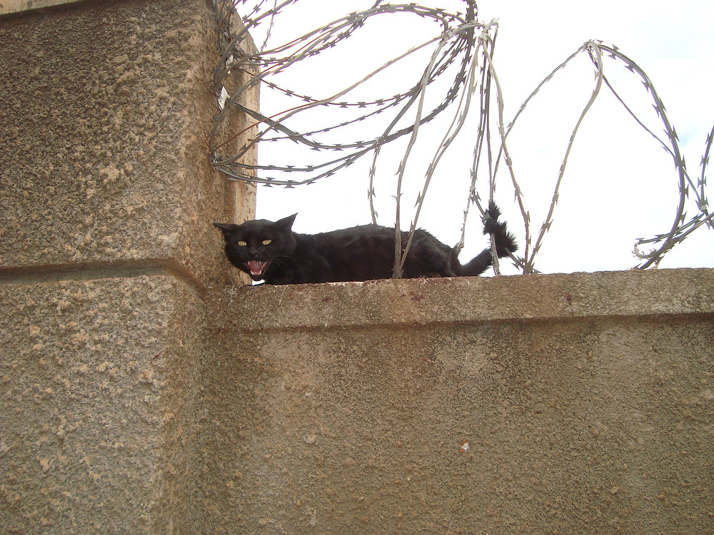 Kitty's tail is stuck in razor wire!
