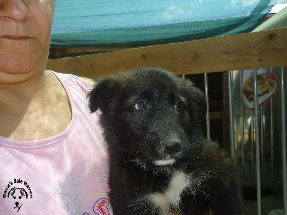 Merlin was rescued from the street full of fleas and worms