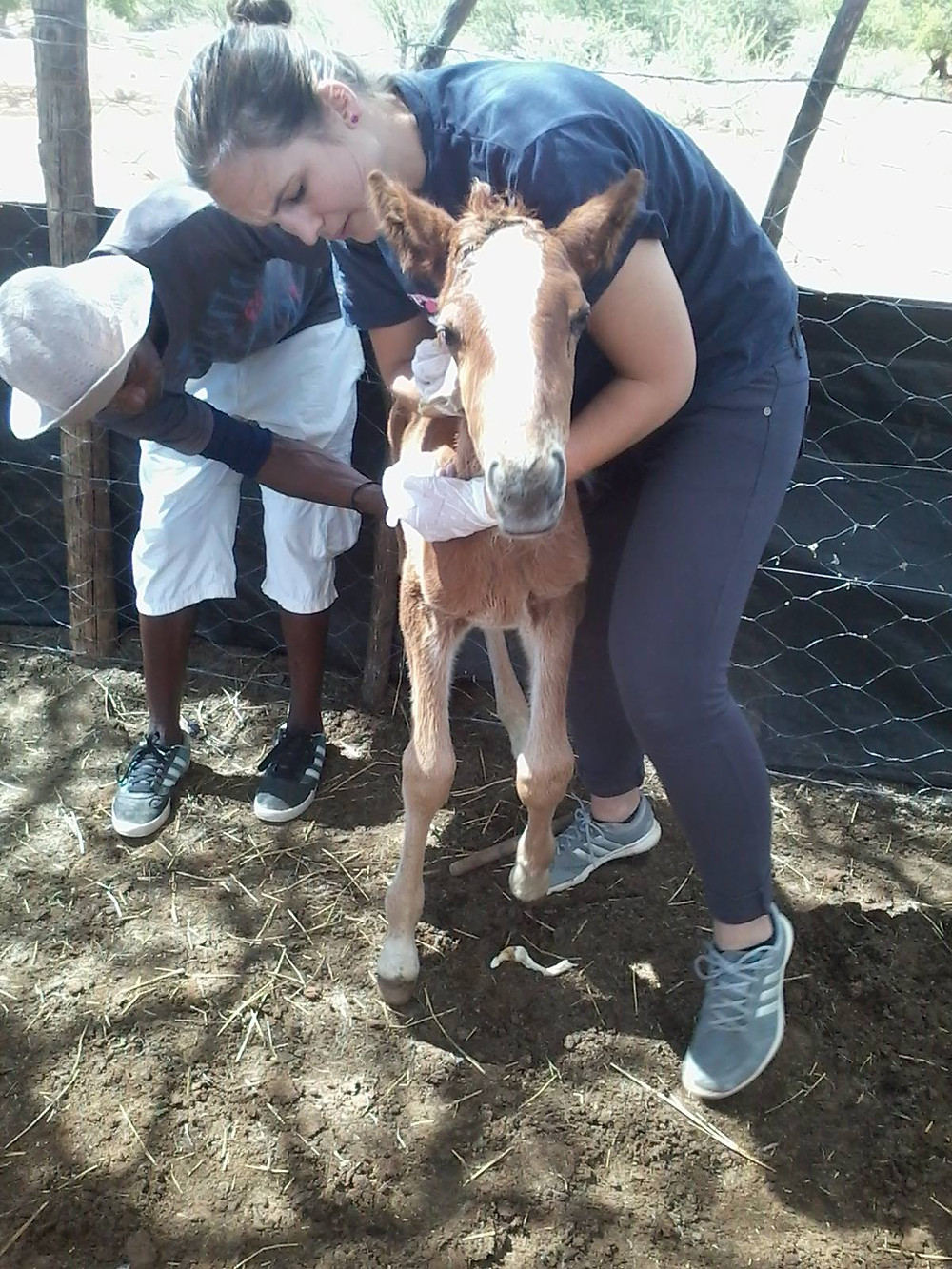 Foal is able to stand