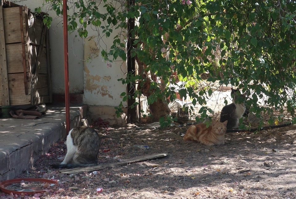 Feral cats in Karibib-spayed and neutered with AKI funds