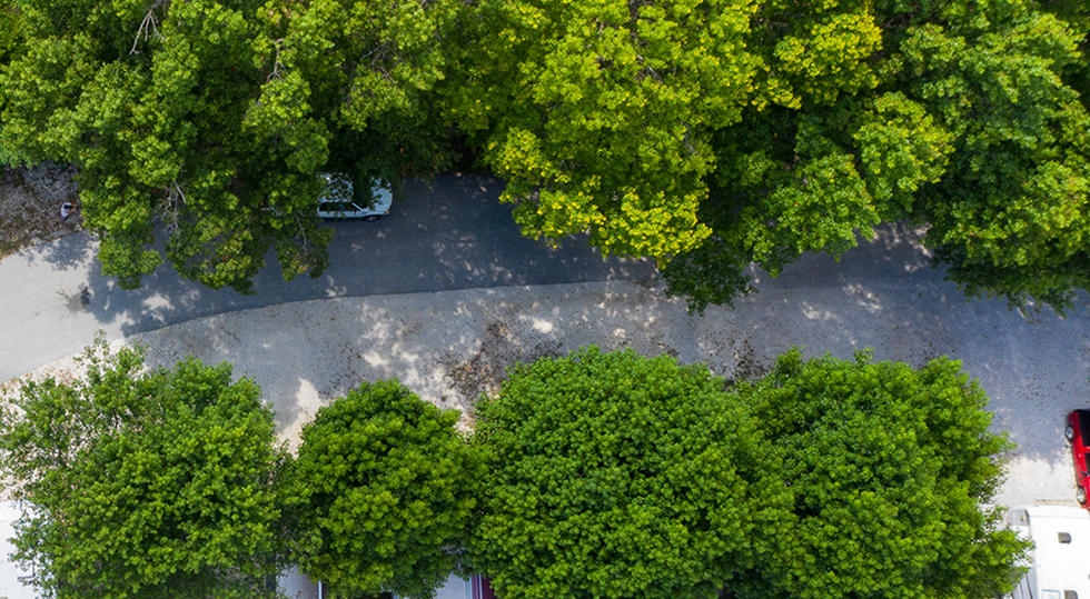 Overhead View of Canopy