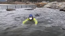 Kitsuke swimming.jpg