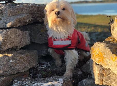 愛犬を寒さから守る防寒着、サーモティック!