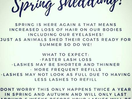 Lash Shed Season Spring 2019