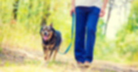 loose-leash-walking-clicker-training-kar