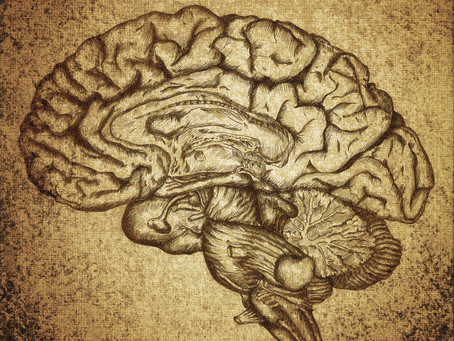 The link between the brain and male fertility system-they have similar genes and proteins