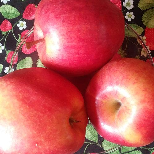 Fresh Gala Apples (Per Bag)-Red Mountain Farm