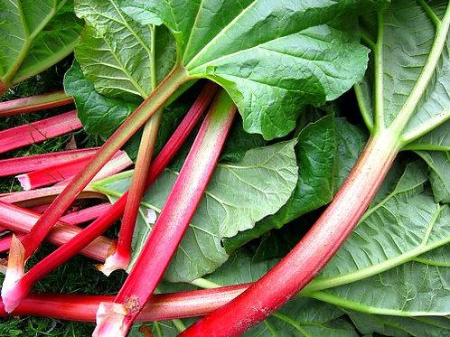 Rhubarb (No Spray - per lb) - Swooping Swallow Farm
