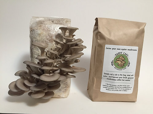 Grow Your Own Oyster Mushroom Kit - Happy Caps Mushroom Farm