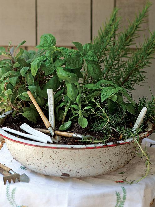 "Herb Garden (16"" Bowl) - Riverview Plants"