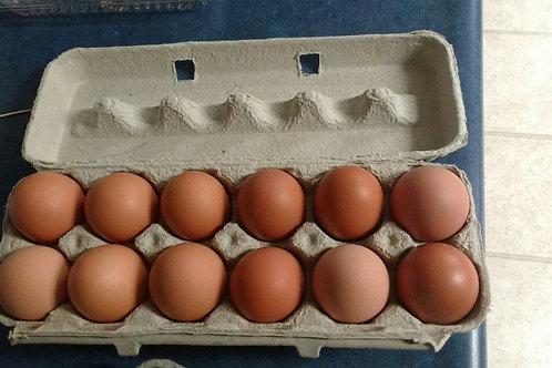 Large Eggs (1 dozen) - Maria and Lydia