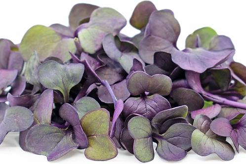 Purple Radish Shoots (bag) - Riverview Herbs