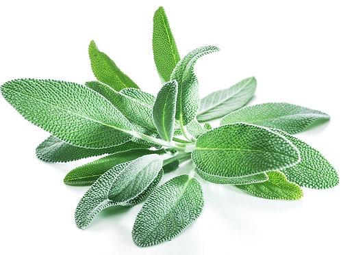 Sage (1 oz bag) - Riverview Herbs