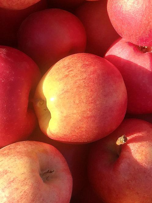 Fresh Jonagold Apples (Per Bag)-Red Mountain Farm