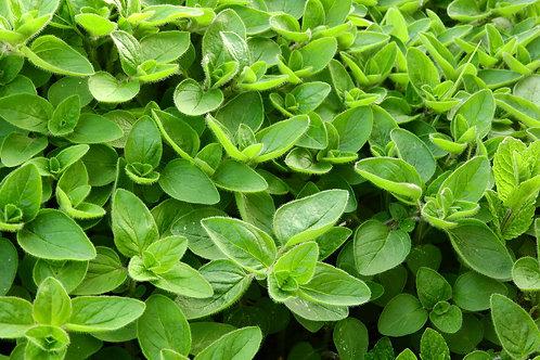 """Sweet Marjoram Plant (per 3.5"""" pot) - Riverview Plants"""