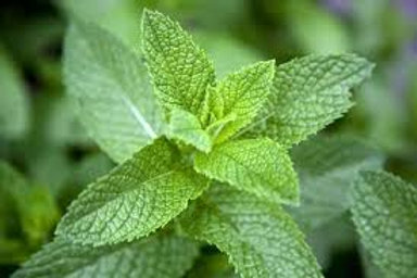 Mint (1 oz bag) - Riverview Herbs