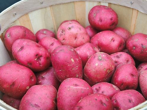 Fresh Red Potatoes (3 lb bag) - Swooping Swallow Farm