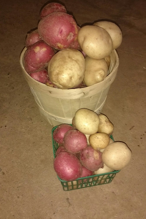 Small Potatoes - Red or White (per lb) - Maria and Lydia