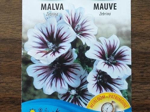 Malva Flower Plants (3 Inch Pot) - Maria and Lydia Plants