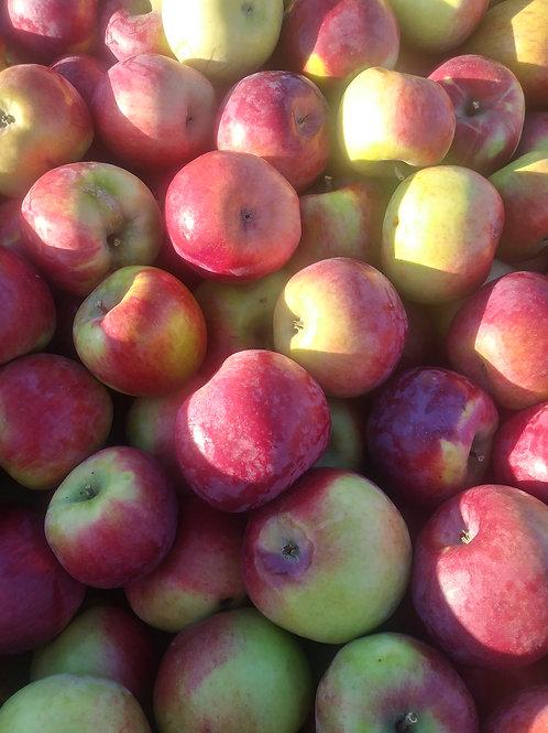 Fresh Cortland Apples (Per Bag)-Red Mountain Farm